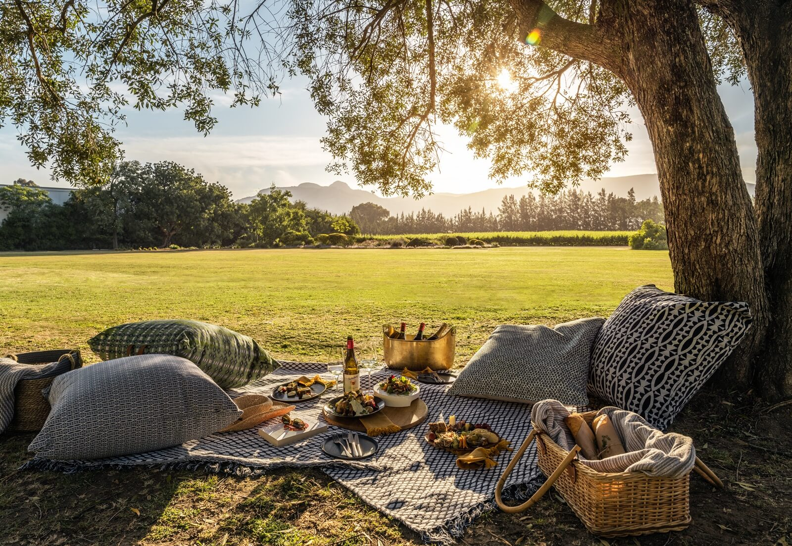 PICNIC IN THE WINELANDS